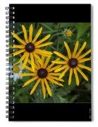 Brown Eyed Girl Spiral Notebook