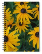 Brown Eyed Susans Spiral Notebook
