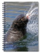 Brown Fur Seal Throwing A Fish Head Spiral Notebook