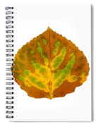 Brown Green And Yellow Aspen Leaf 3 Spiral Notebook