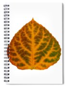 Brown Green Orange And Red Aspen Leaf 1 Spiral Notebook