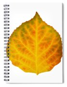 Brown Green Orange Red And Yellow Aspen Leaf 3 Spiral Notebook