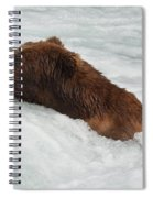 Brown Grizzly Bear Swimming  Spiral Notebook