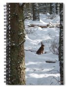 Brown Hare - Snow Wood Spiral Notebook