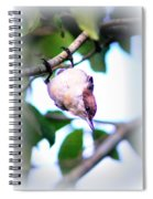 Brown-headed Nuthatch 9173-006 Spiral Notebook