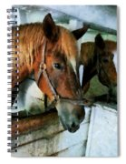 Brown Horse In Stall Spiral Notebook