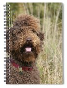 Brown Labradoodle In Field Spiral Notebook