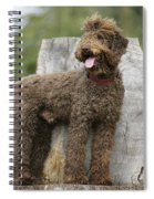 Brown Labradoodle Standing On Tree Stump Spiral Notebook