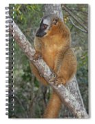 brown Maki Madagascar 1 Spiral Notebook