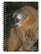 brown Maki Madagascar 2 Spiral Notebook