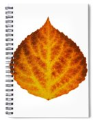Brown Orange And Yellow Aspen Leaf 1 Spiral Notebook