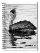 Brown Pelican - Black And White Spiral Notebook