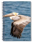 Brown Pelican Flying Spiral Notebook