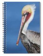 Brown Pelican Head Shot Spiral Notebook