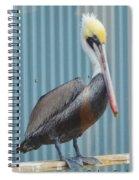 Brown Pelican II Spiral Notebook