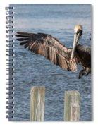 Brown Pelican Touchdown Spiral Notebook