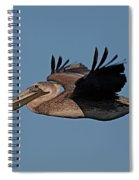 Brown Pelican Pelecanus Occidentals  Photo By Pat Hathaway 2007 Spiral Notebook