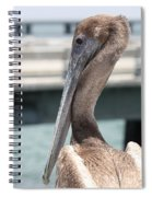 Brown Pelican Portrait Spiral Notebook