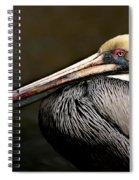 Brown Pelican Portrait Spiral Notebook