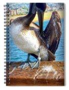 Brown Pelican Preen  Spiral Notebook