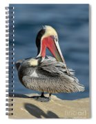Brown Pelican Preening Spiral Notebook