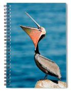 Brown Pelican Showing Pouch Spiral Notebook