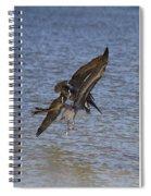 Brown Pelican - Triptych Spiral Notebook