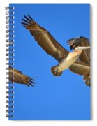 Brown Pelicans In Flight Spiral Notebook