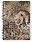 Brown Rat Spiral Notebook