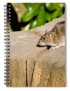 Brown Rat On Log Spiral Notebook