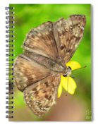 Brown Skipper Butterfly Square Spiral Notebook
