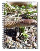 Brown Snake Spiral Notebook