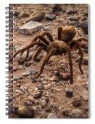 Brown Tarantula Spiral Notebook