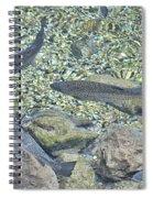 Brown Trout Spiral Notebook