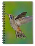 Brown Violet-ear Hummingbird Spiral Notebook