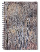 Brown Winter Forest With Bare Trees Spiral Notebook