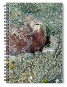 Brownstripe Octopus Burying Itself Spiral Notebook
