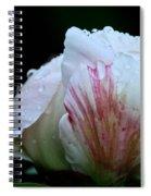 Brush Stroked Spiral Notebook