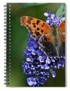 Brushfoot Satyr Comma Spiral Notebook