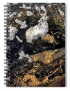 Bubbles Afloat Spiral Notebook