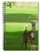Buck And Doe Spiral Notebook