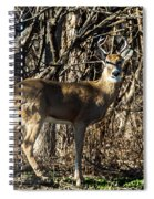 Buck In The Woods Spiral Notebook