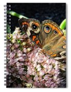 Buckeye Butterfly On Sedum Spiral Notebook