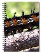 Buckeye Caterpillar 2 Spiral Notebook