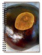 Buckeye Spiral Notebook