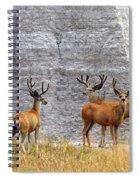 Bucks Abound Spiral Notebook