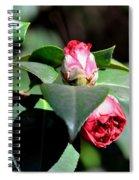 Budding Camelias 2 Spiral Notebook