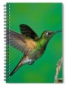 Buff-tailed Coronet Spiral Notebook