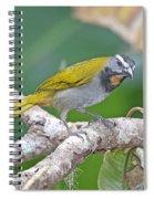 Buff-throated Saltador Spiral Notebook