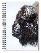 Buffalo   #0164 Spiral Notebook